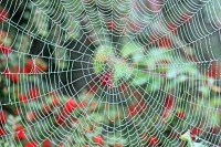 Blogging: Is Your Web Tangled?
